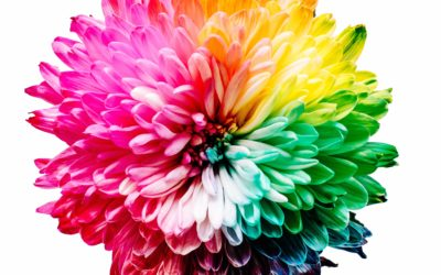 Journaling Interview: Andrea Schroeder of ABC Creativity